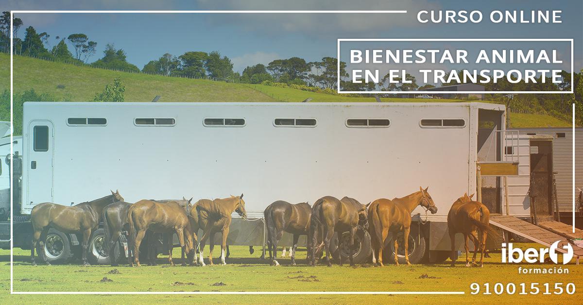 Curso Bienestar Animal en el Transporte Convocatoria Nacional
