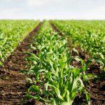 Conversión a la Agricultura Ecológica