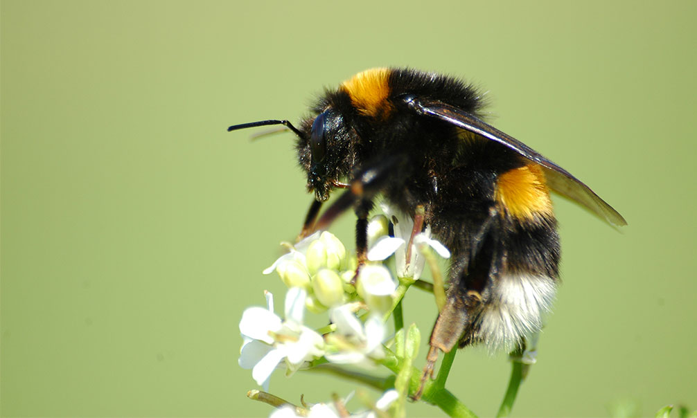 abeja portada