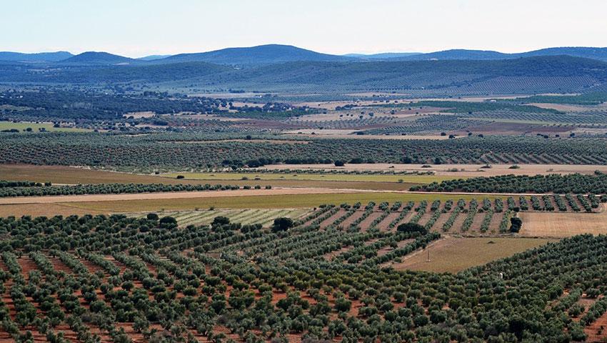 Castilla la Mancha panorámica