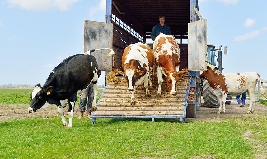 Carnet transporte animales vivos