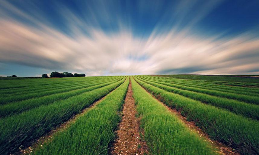 Agricultura ecologica reglamento