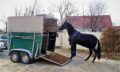 Requisitos para el bienestar animal en el transporte de caballos